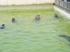De zeehonden voeren